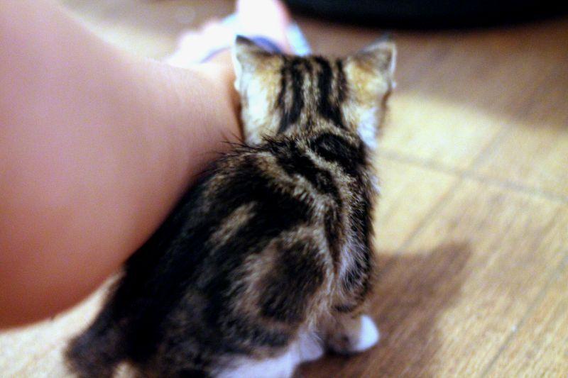 baby-cat+1