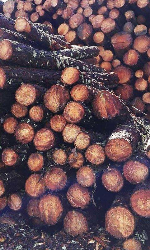 logs-of-wood