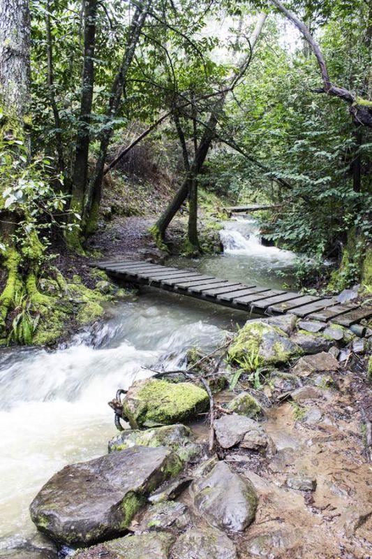 orvalho-pontes