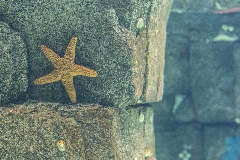 estrela-do-mar-2
