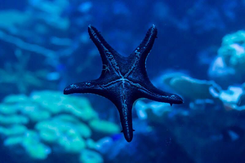 estrela-do-mar