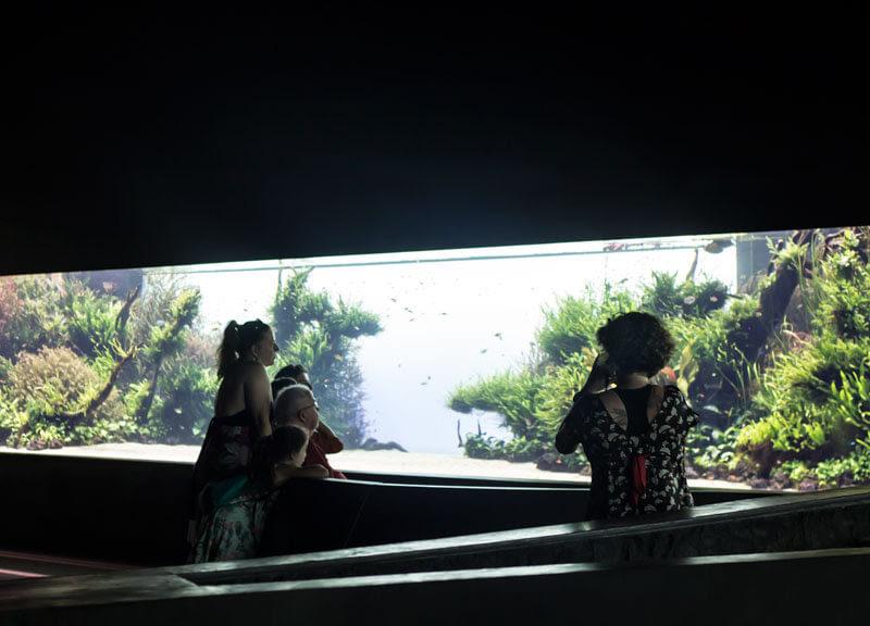 florestas-submersas-2