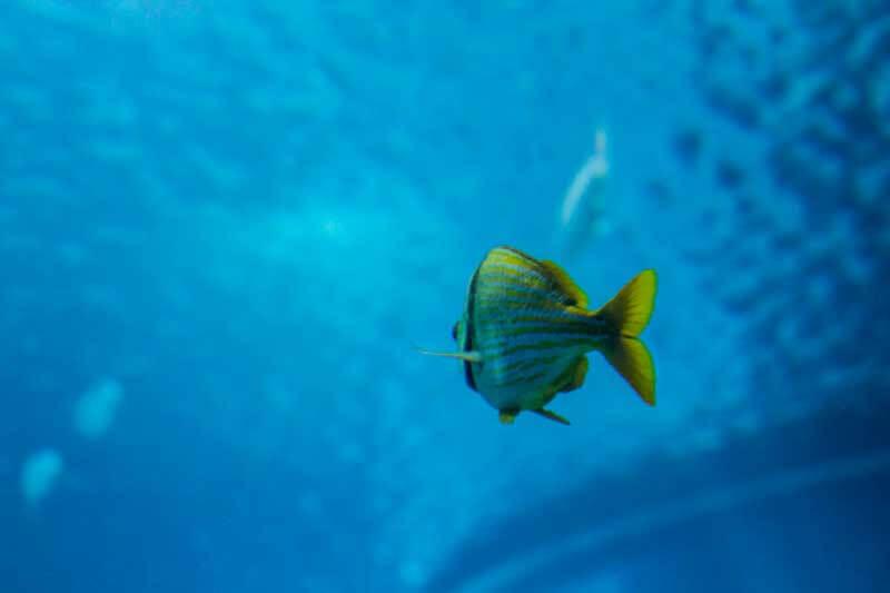 peixe3