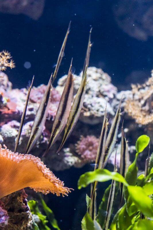 peixes-verticais