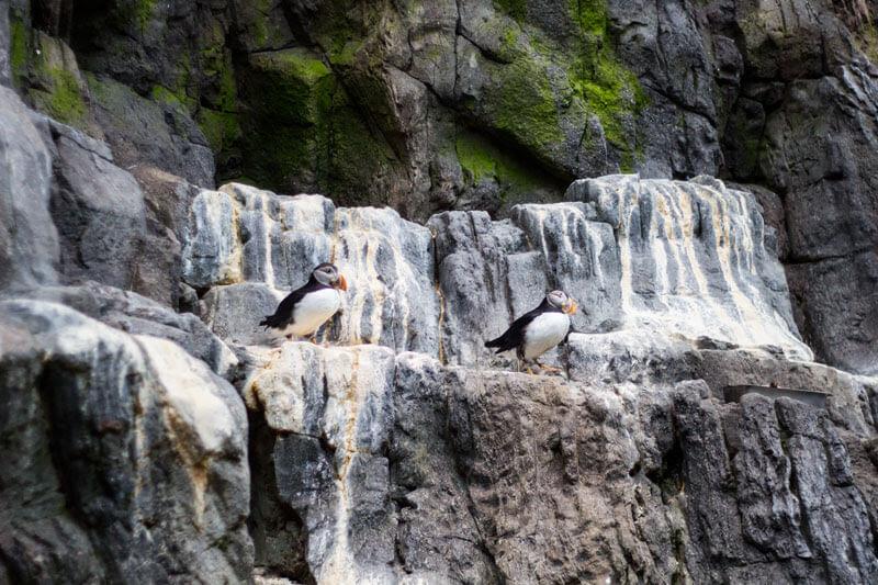 pinguins3